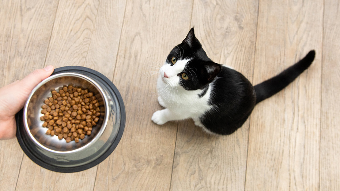 Cat food grain free listing page
