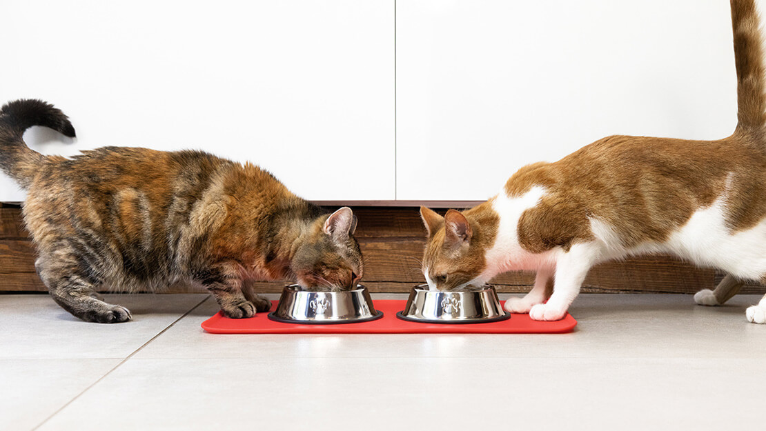 Cat food hypoallergenic listing page