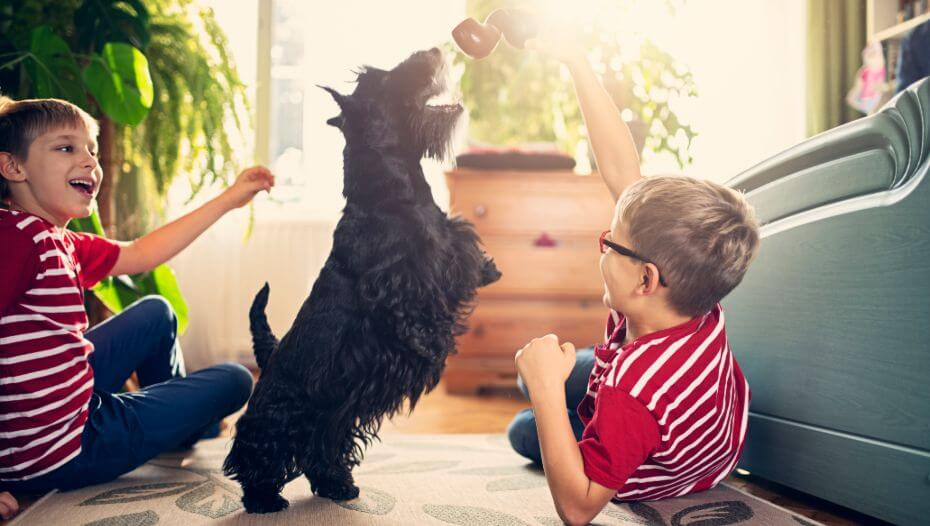 Scottish Terrier plying with the children