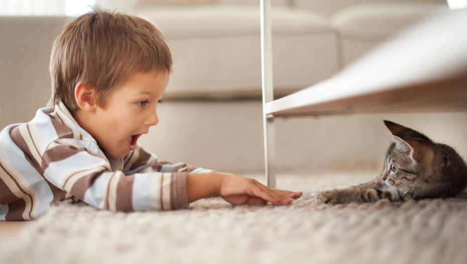 Dark furred kitten hiding under a shelf, playing with young boy