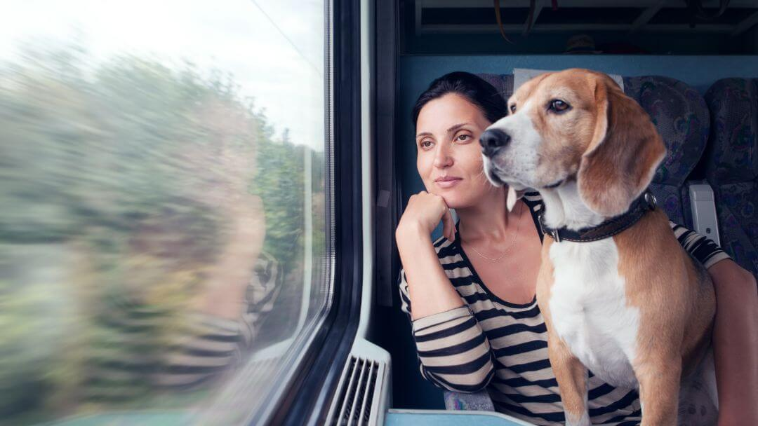 woman and beagle looking out a train window