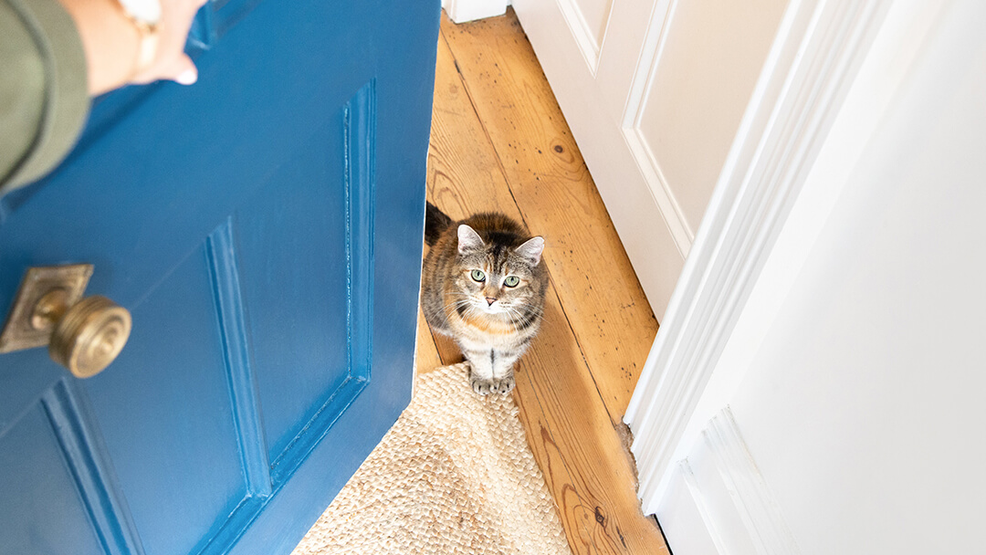 Opening blue door to cat sitting on wooden floor