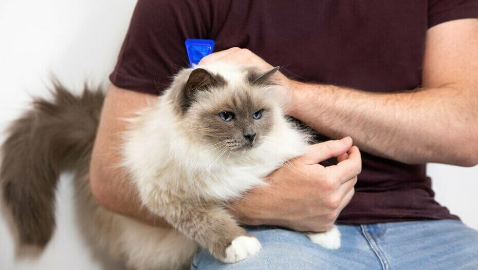 man holding fluffy cat