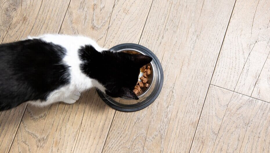 black and white cat eating from a bowl