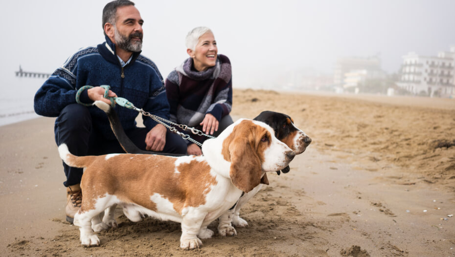 Basset hounds with the owners on the beach.