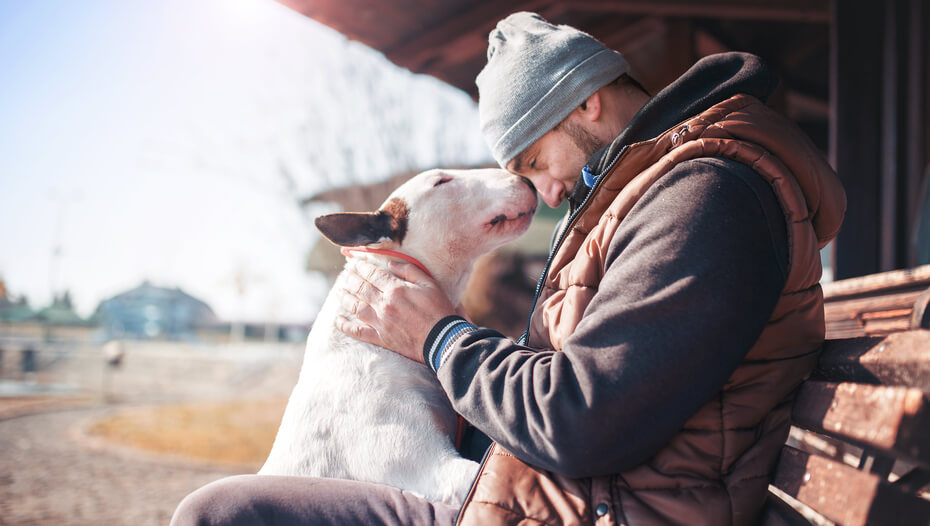 Bull terrier with the owner