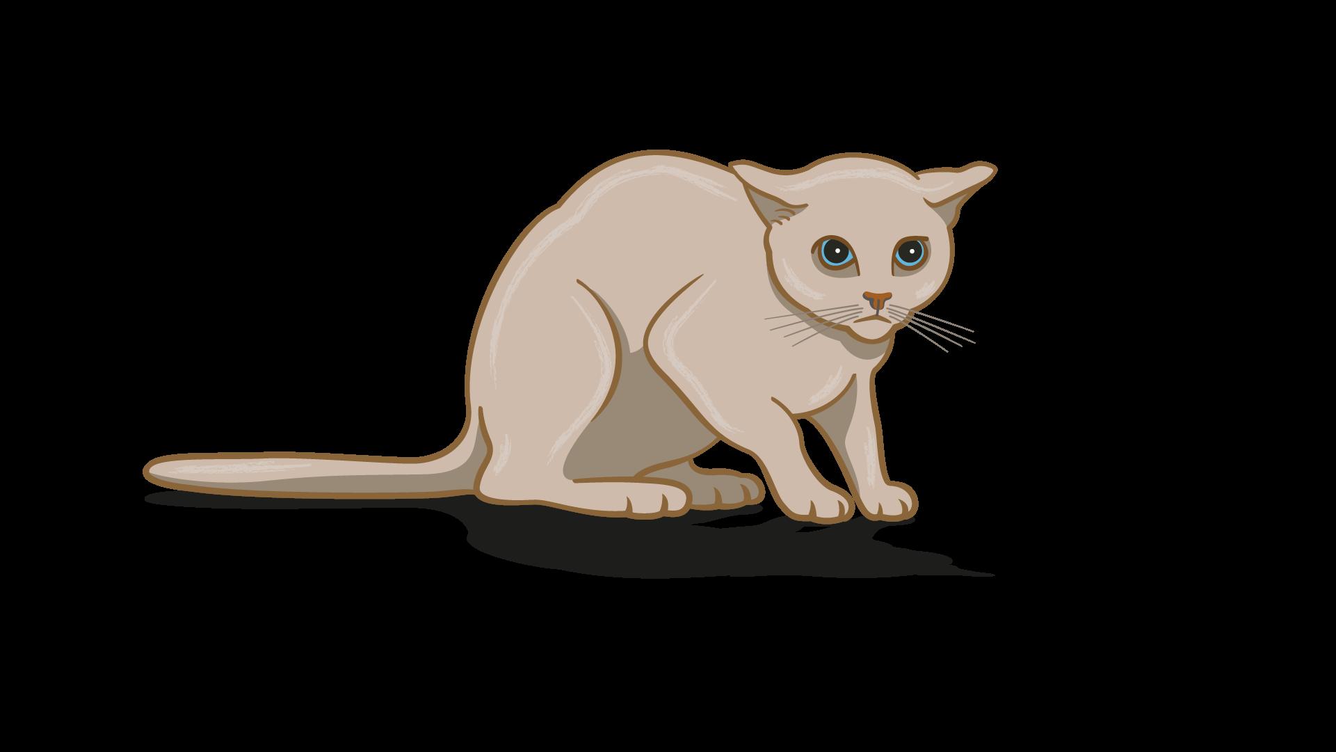 lenguaje corporal de gato ansioso