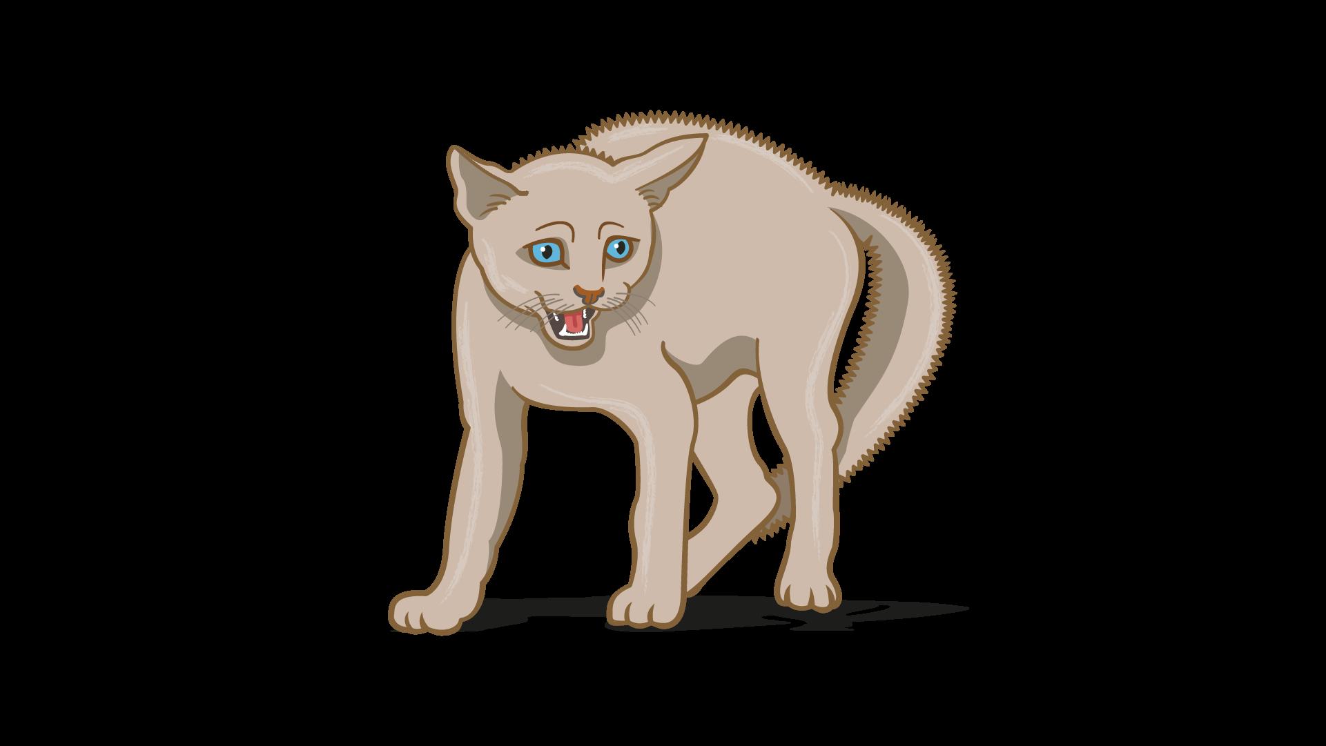 lenguaje corporal de gato temeroso