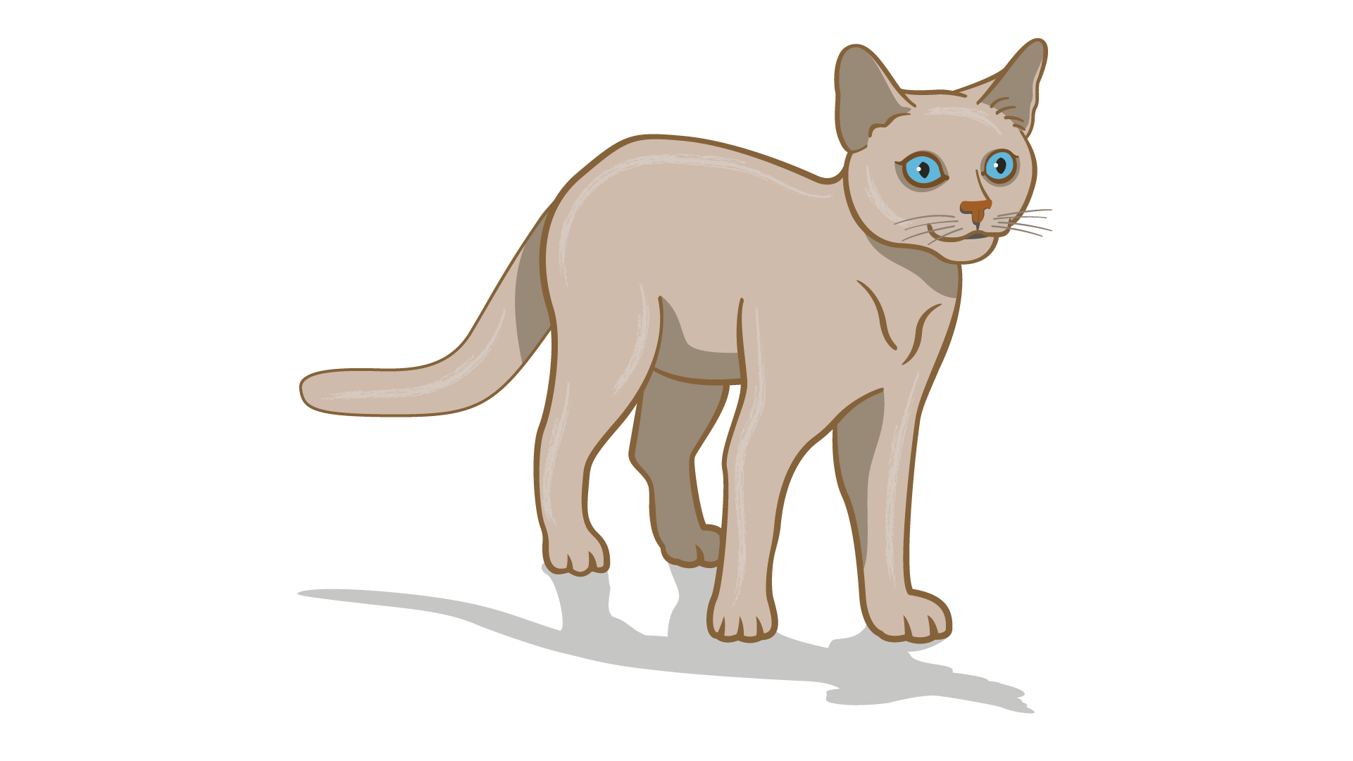 lenguaje corporal de gato enfocado