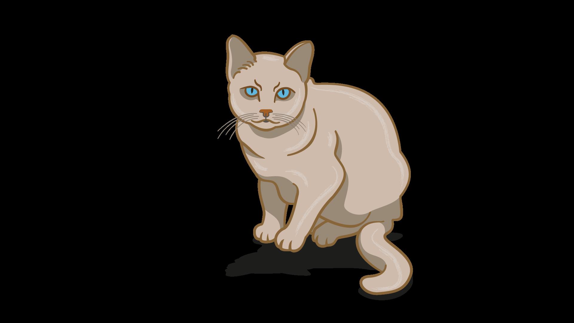 lenguaje corporal frustrado del gato