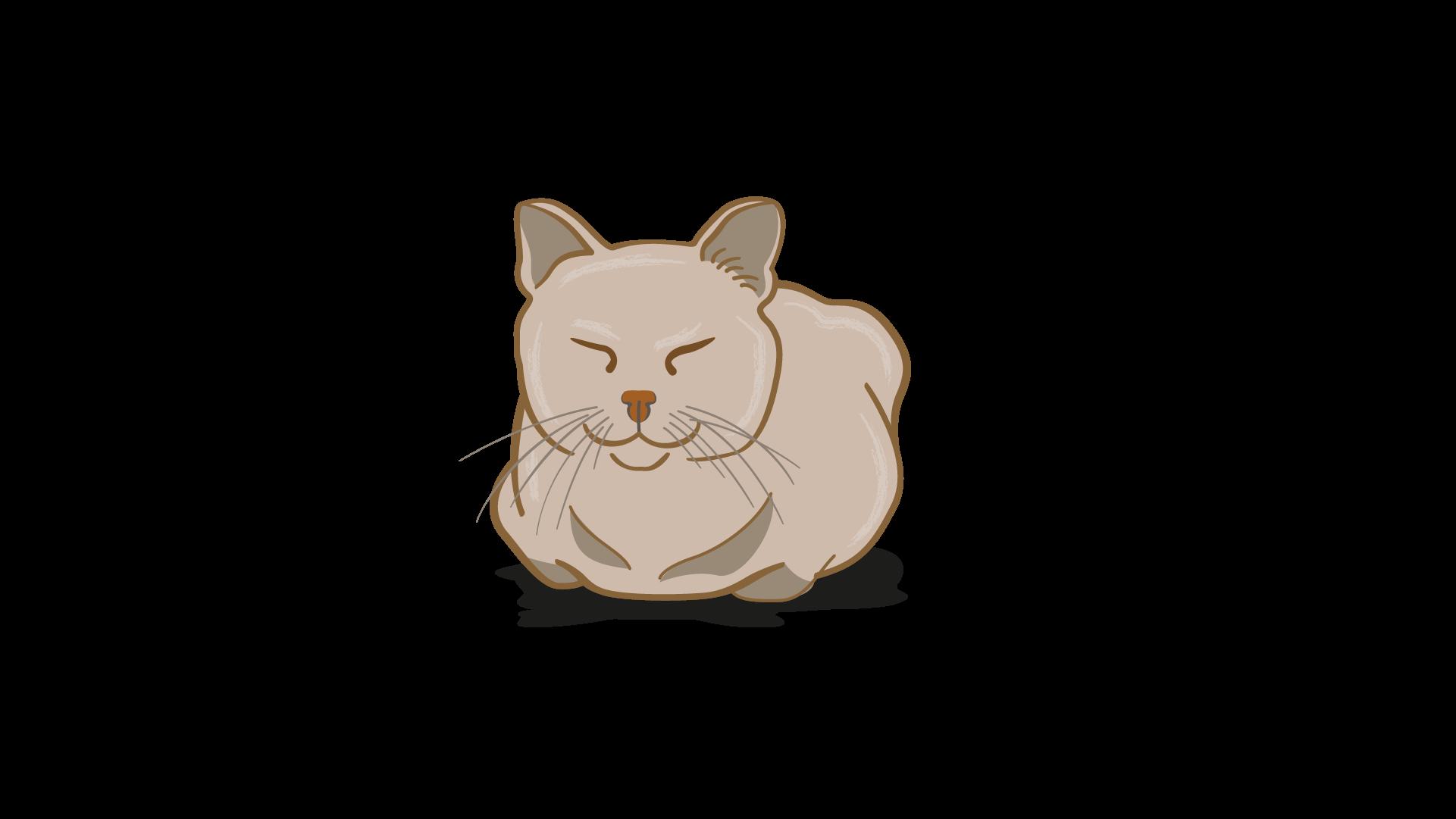 lenguaje corporal de gato feliz