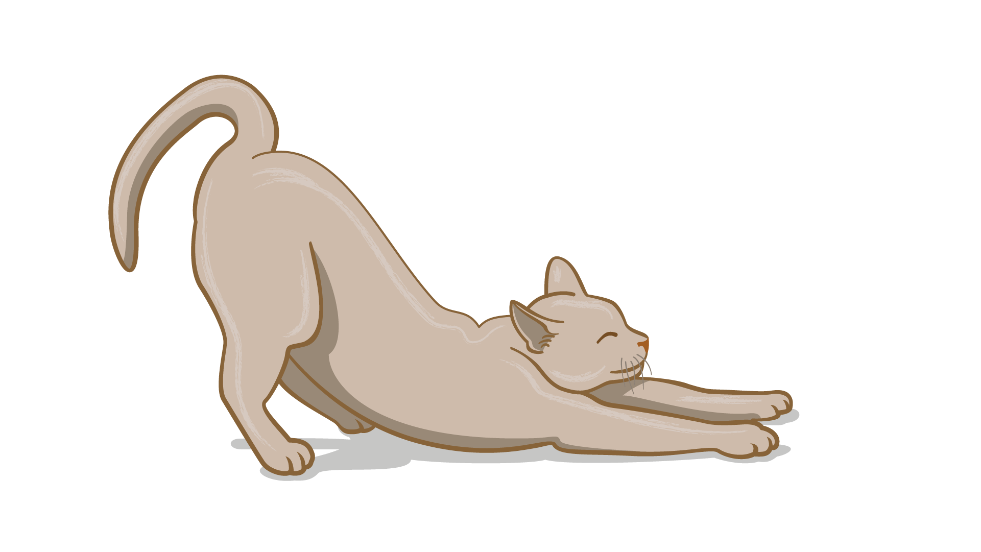 lenguaje corporal de gato aliviado