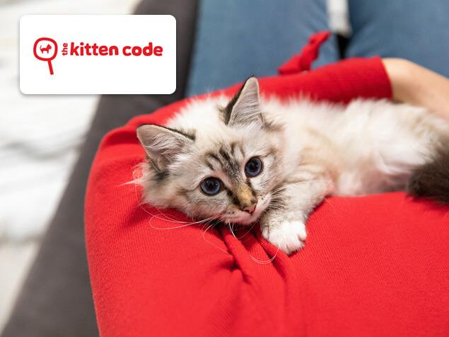 kitten sitting on someone's lap