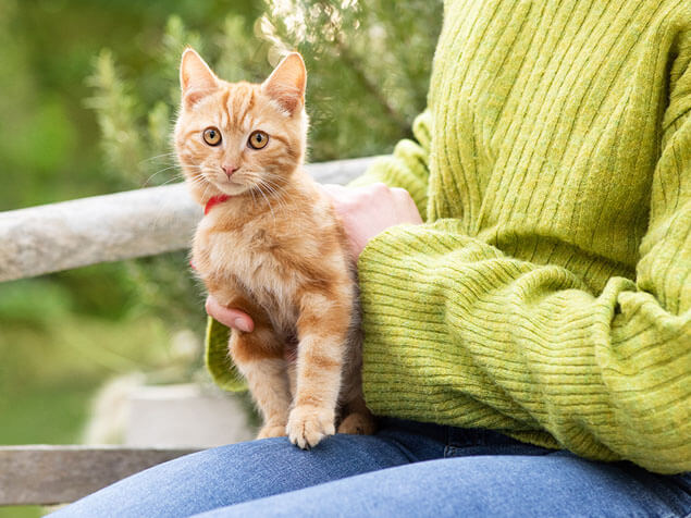 Ginger kitten sitting on woman's shoulder