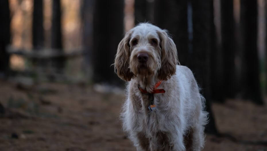 Dog standing in dark forest