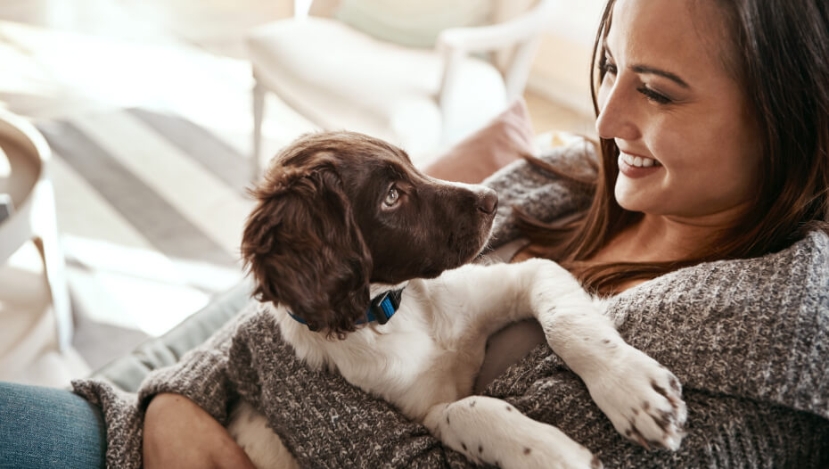 Woman holding English Springer Spaniel puppy