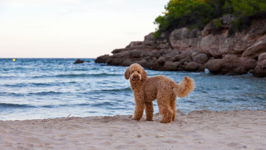 Dog standing on the see shore