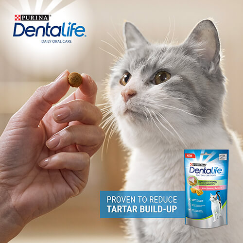 dentalife cat