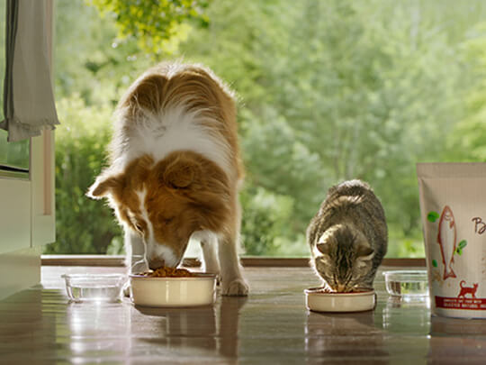 Beyond dog and cat