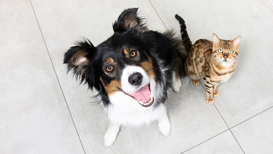 dog and cat sitting together and looking up