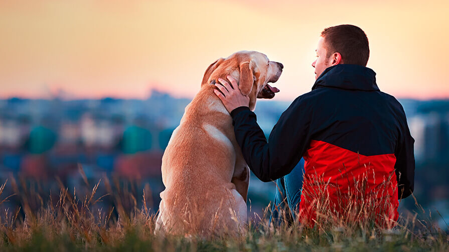 owner and labrador watching the sunset