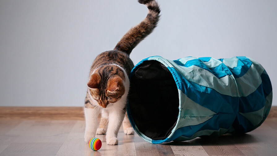 cat playing with its toys