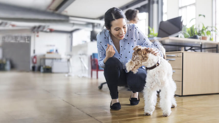 dog in the office with owner