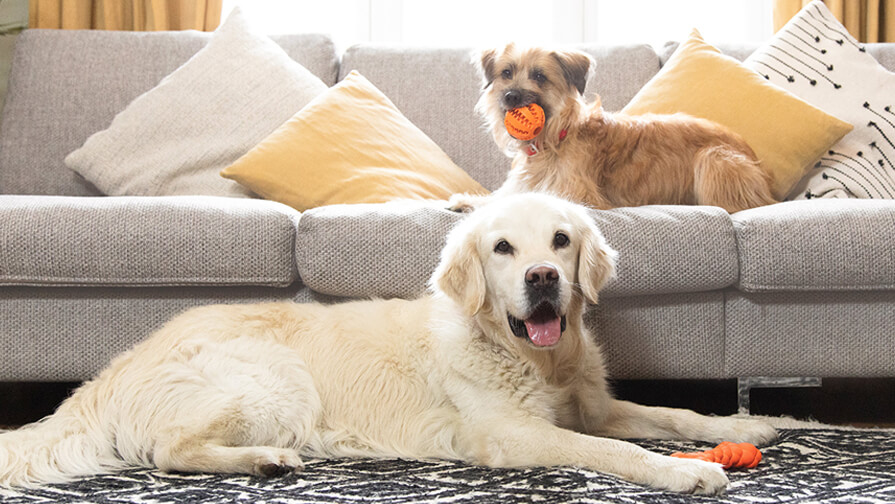 two dogs laying on a sofa