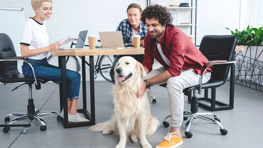 Happy golden retriever at work with colleagues