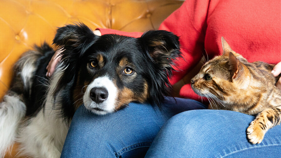 dog and cat sitting in owner's lap