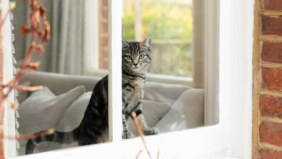 Kitten looking out the window at home