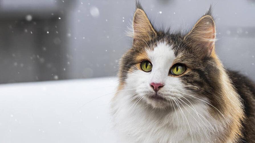 managing cat allergens