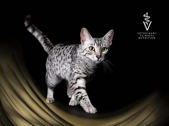 PPVD Cat hero