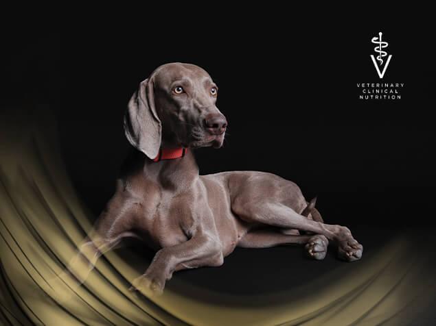 PPVD Dog hero