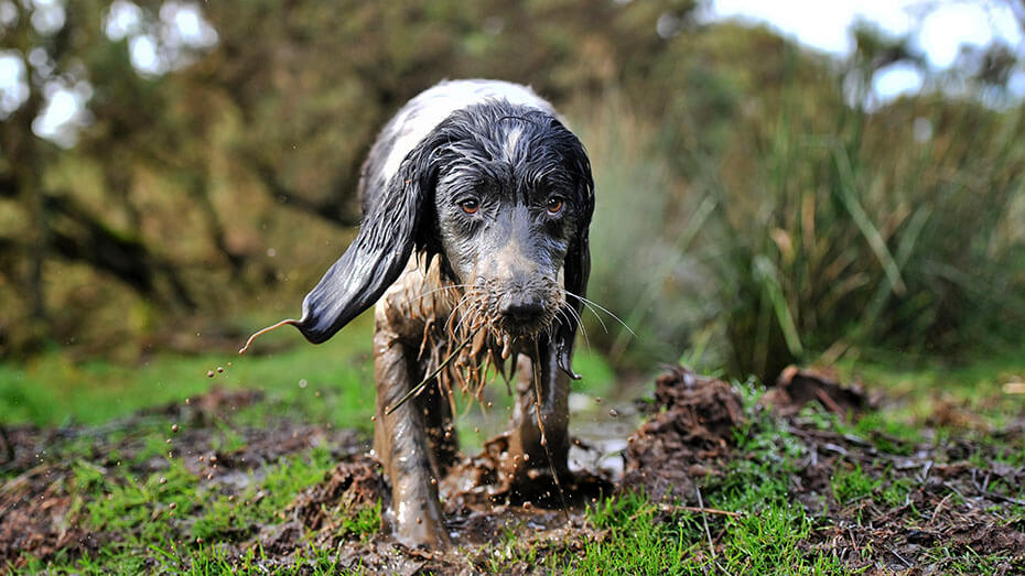 Dog in the mud