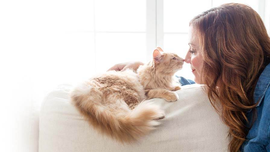 Cat touching nose to nose with woman