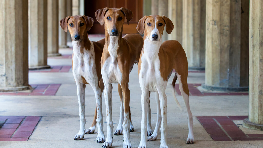Three dog's standing