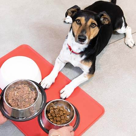 Dog next to bowls