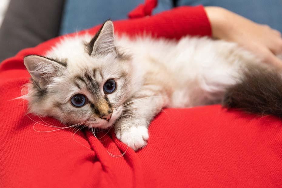 Kitten Code