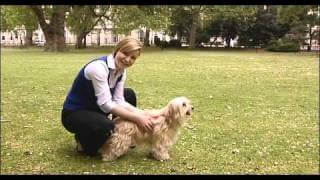 How to body condition score your dog with vet Zara